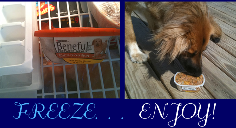 freeze premade dog meals hot day doggie treat