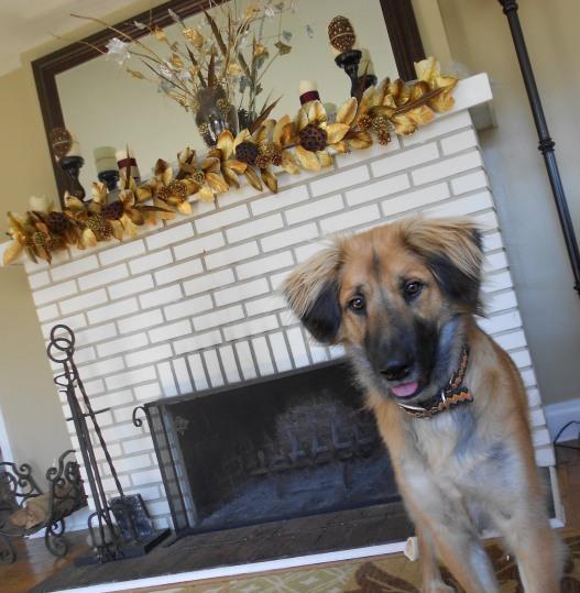 dog krypto thanksgiving mantle